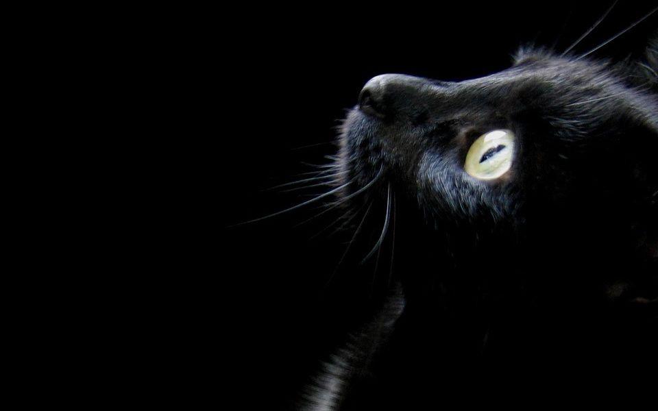 Wolfgang´s Powerpoint Präsentation Katzenverrückt heiten