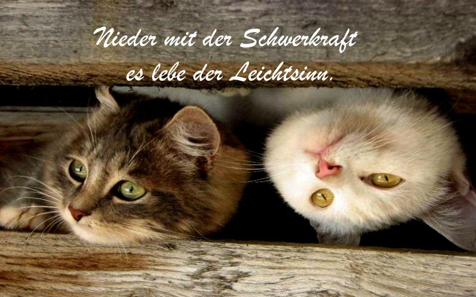 Dass ich in Englisch träume, stört mich nicht, aber mich nerven die deutschen Untertitel!