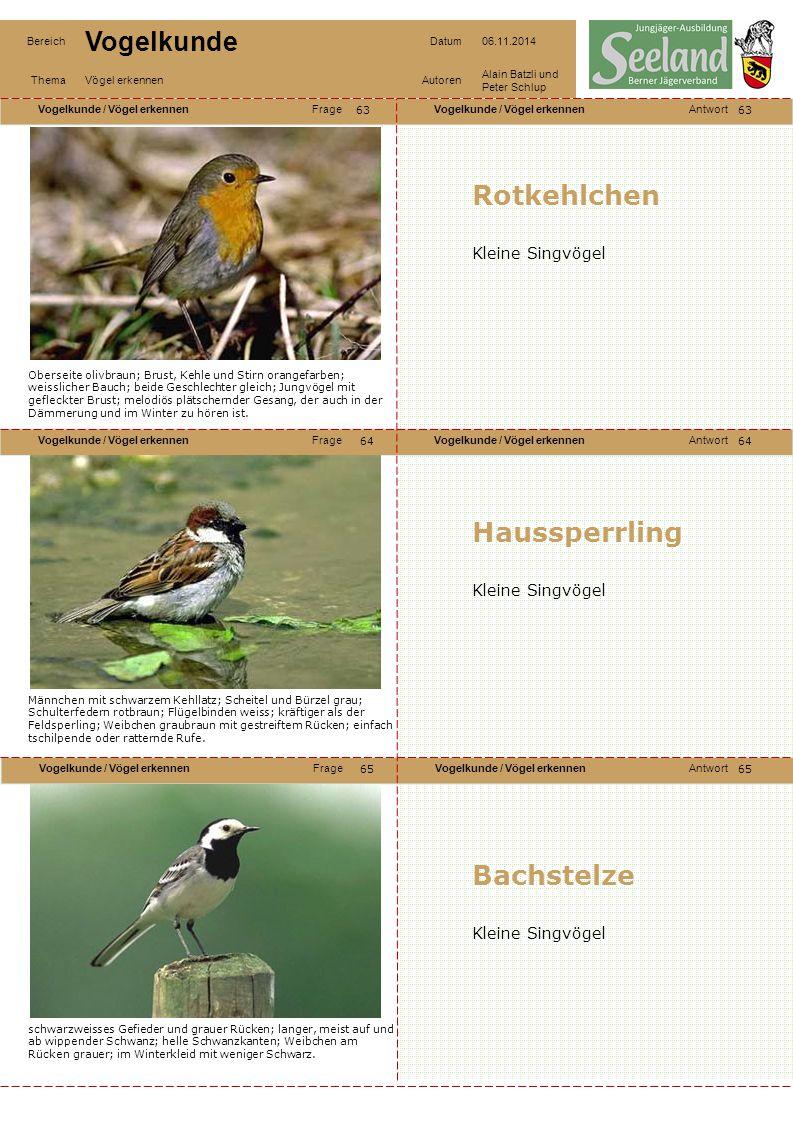 Vogelkunde / Vögel erkennenFrageVogelkunde / Vögel erkennenAntwort Vogelkunde / Vögel erkennenFrageVogelkunde / Vögel erkennenAntwort Vogelkunde / Vög