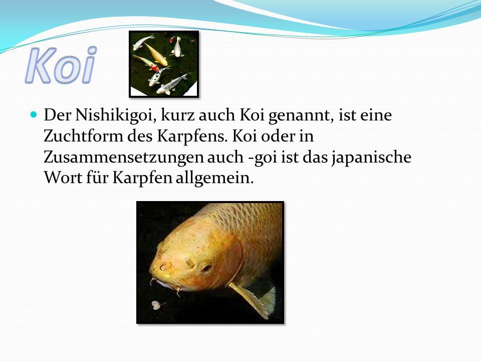 Der Nishikigoi, kurz auch Koi genannt, ist eine Zuchtform des Karpfens. Koi oder in Zusammensetzungen auch -goi ist das japanische Wort für Karpfen al