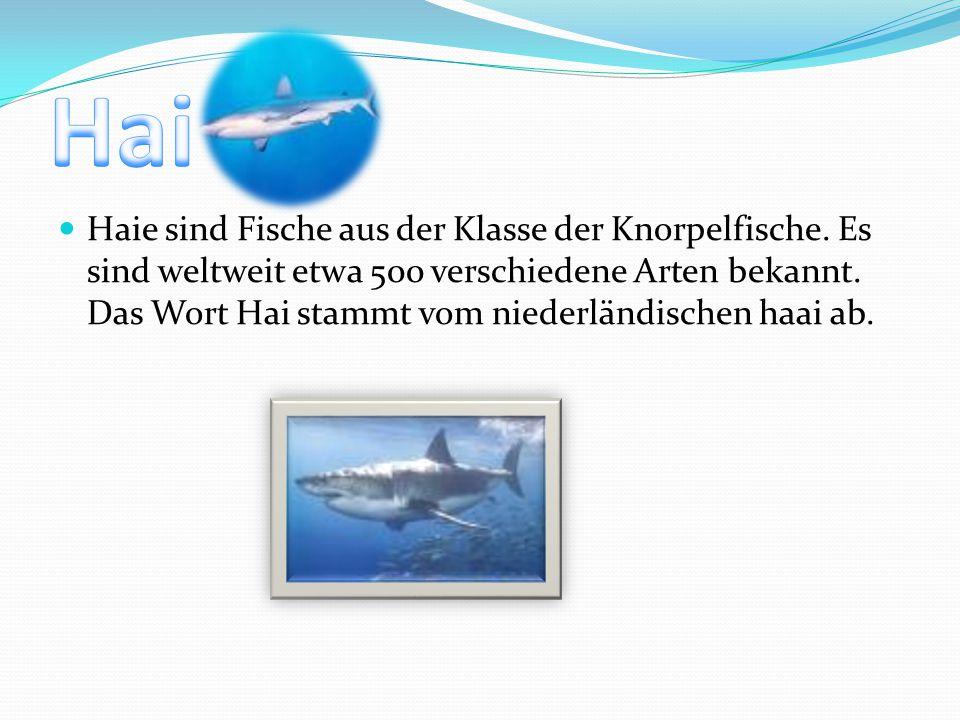 Haie sind Fische aus der Klasse der Knorpelfische. Es sind weltweit etwa 500 verschiedene Arten bekannt. Das Wort Hai stammt vom niederländischen haai