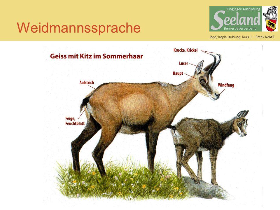 Jagd/Jagdausübung: Kurs 1 – Patrik Keh rli Weidmannssprache