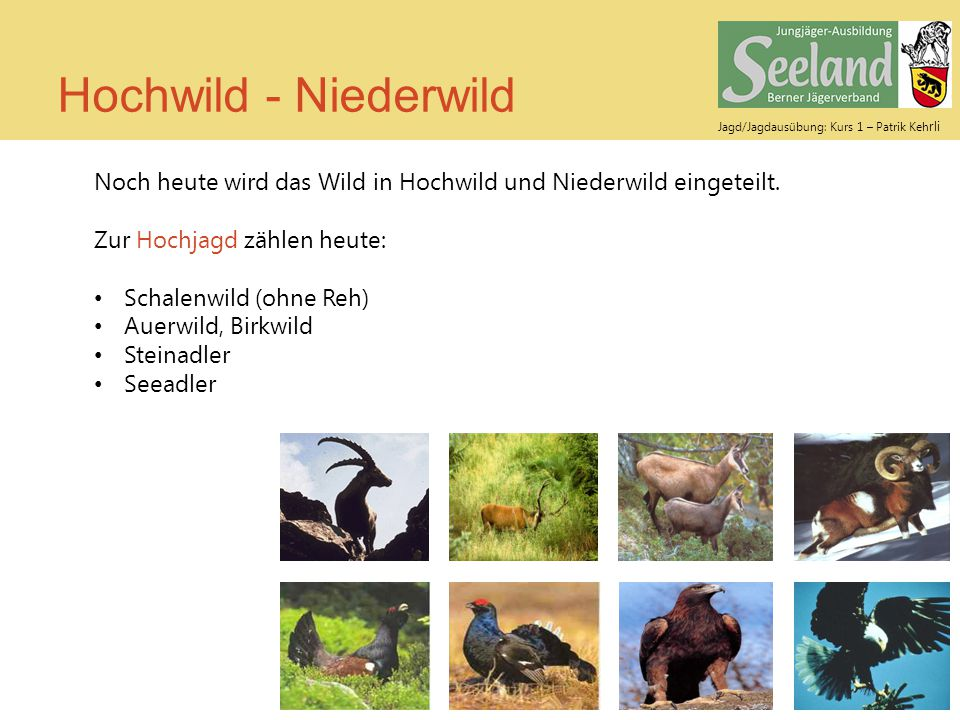 Jagd/Jagdausübung: Kurs 1 – Patrik Keh rli Hochwild - Niederwild Noch heute wird das Wild in Hochwild und Niederwild eingeteilt. Zur Hochjagd zählen h