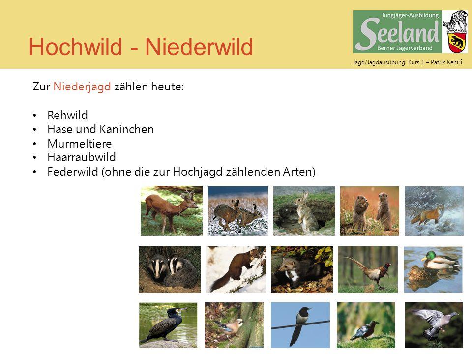 Jagd/Jagdausübung: Kurs 1 – Patrik Keh rli Hochwild - Niederwild Zur Niederjagd zählen heute: Rehwild Hase und Kaninchen Murmeltiere Haarraubwild Fede