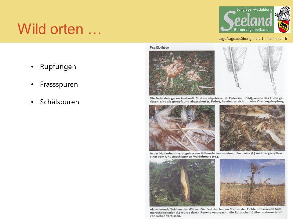 Jagd/Jagdausübung: Kurs 1 – Patrik Keh rli Wild orten … Rupfungen Frassspuren Schälspuren
