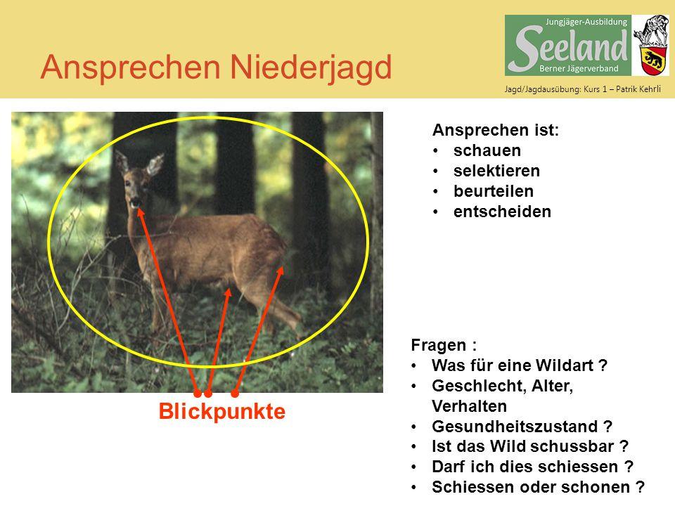 Jagd/Jagdausübung: Kurs 1 – Patrik Keh rli Ansprechen Niederjagd Ansprechen ist: schauen selektieren beurteilen entscheiden Fragen : Was für eine Wild