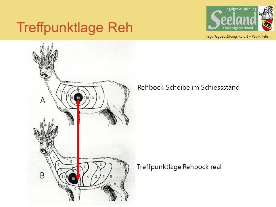 Jagd/Jagdausübung: Kurs 1 – Patrik Keh rli Treffpunktlage Reh Rehbock-Scheibe im Schiessstand Treffpunktlage Rehbock real