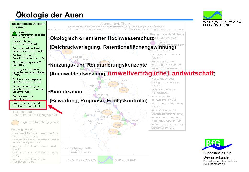Bundesanstalt für Gewässerkunde Projektgruppe Elbe-Ökologie PG-Elbe@bafg.de Ökologie der Auen Ökologisch orientierter Hochwasserschutz (Deichrückverle