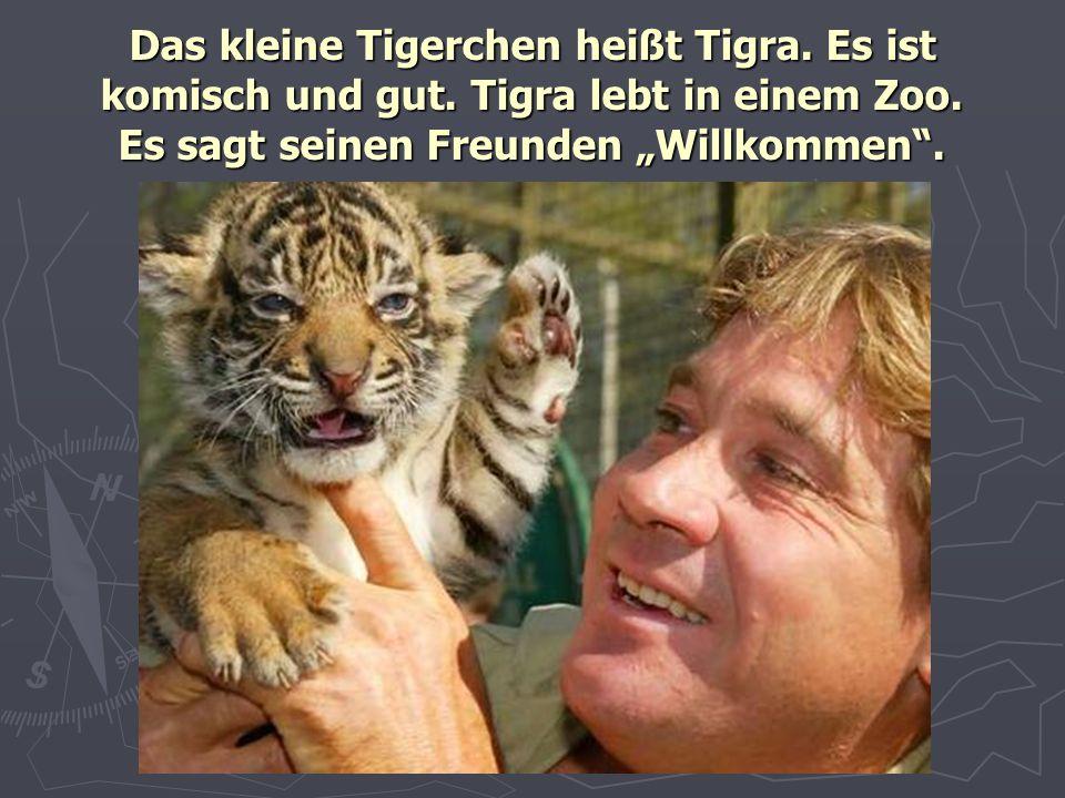 """Das kleine Tigerchen heißt Tigra. Es ist komisch und gut. Tigra lebt in einem Zoo. Es sagt seinen Freunden """"Willkommen""""."""