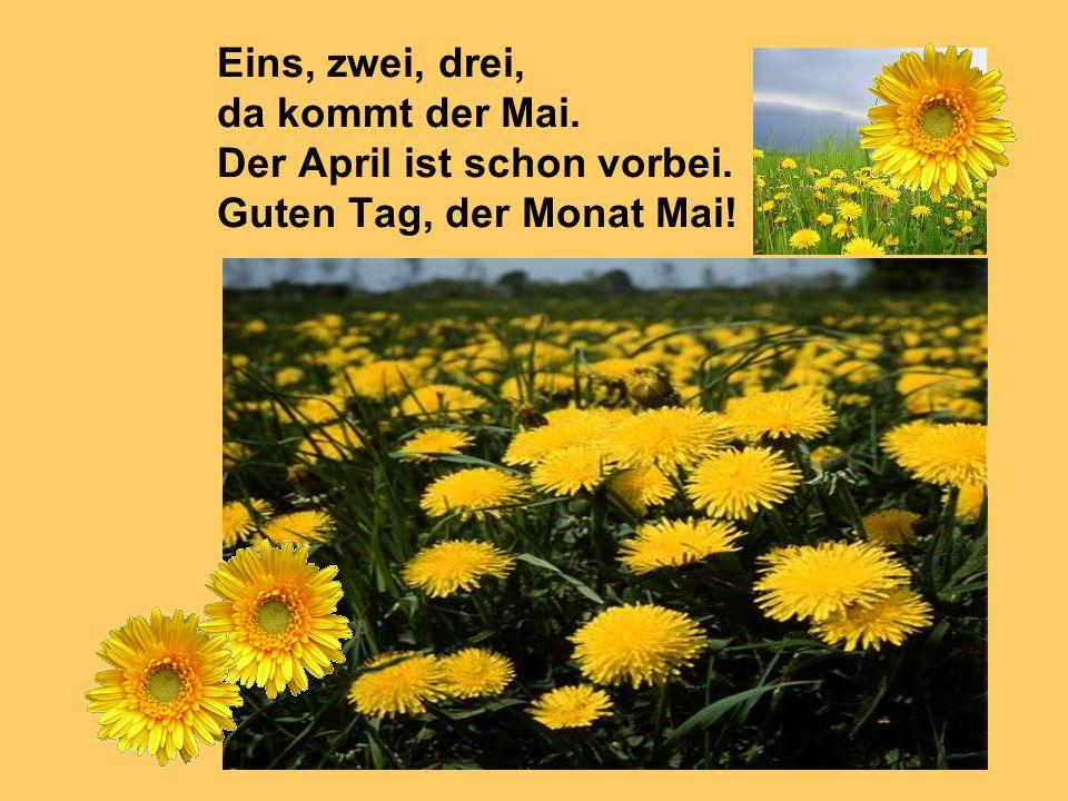 Eins, zwei, drei, da kommt der Mai. Der April ist schon vorbei. Guten Tag, der Monat Mai!