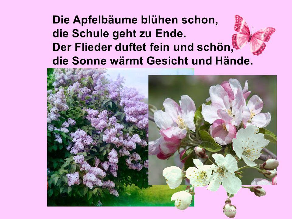 Die Apfelbäume blühen schon, die Schule geht zu Ende. Der Flieder duftet fein und schön, die Sonne wärmt Gesicht und Hände.
