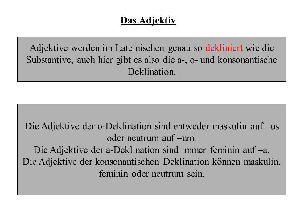 Adjektive der a-Deklination bon - aNominativSingular bon - amAkkusativSingular
