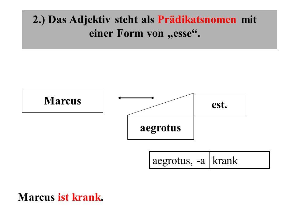 """2.) Das Adjektiv steht als Prädikatsnomen mit einer Form von """"esse"""". Marcus est. aegrotus aegrotus, -akrank Marcus ist krank."""