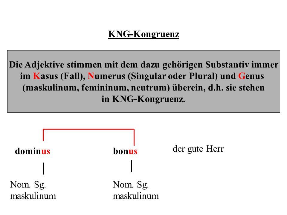 KNG-Kongruenz Die Adjektive stimmen mit dem dazu gehörigen Substantiv immer im Kasus (Fall), Numerus (Singular oder Plural) und Genus (maskulinum, fem