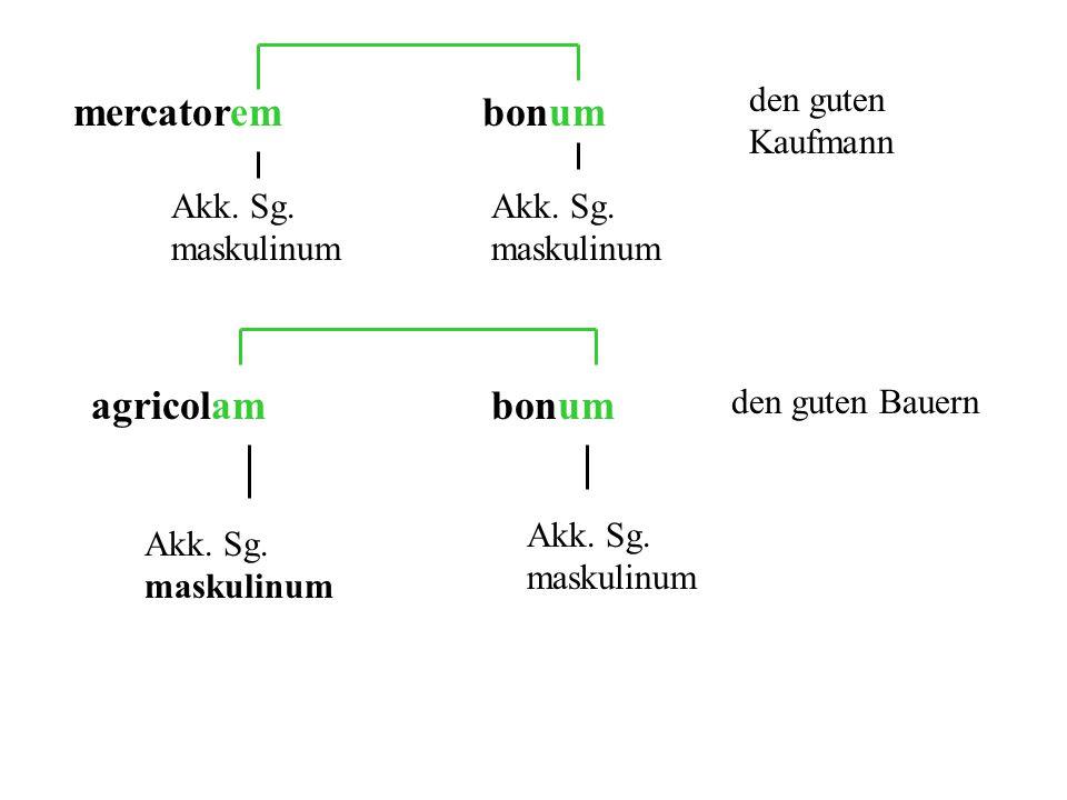 mercatorembonum Akk. Sg. maskulinum den guten Kaufmann agricolambonum Akk. Sg. maskulinum den guten Bauern
