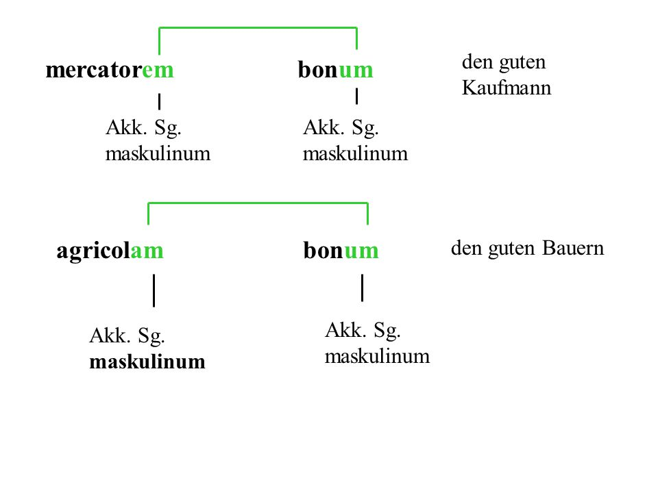 mercatorembonum Akk.Sg. maskulinum den guten Kaufmann agricolambonum Akk.