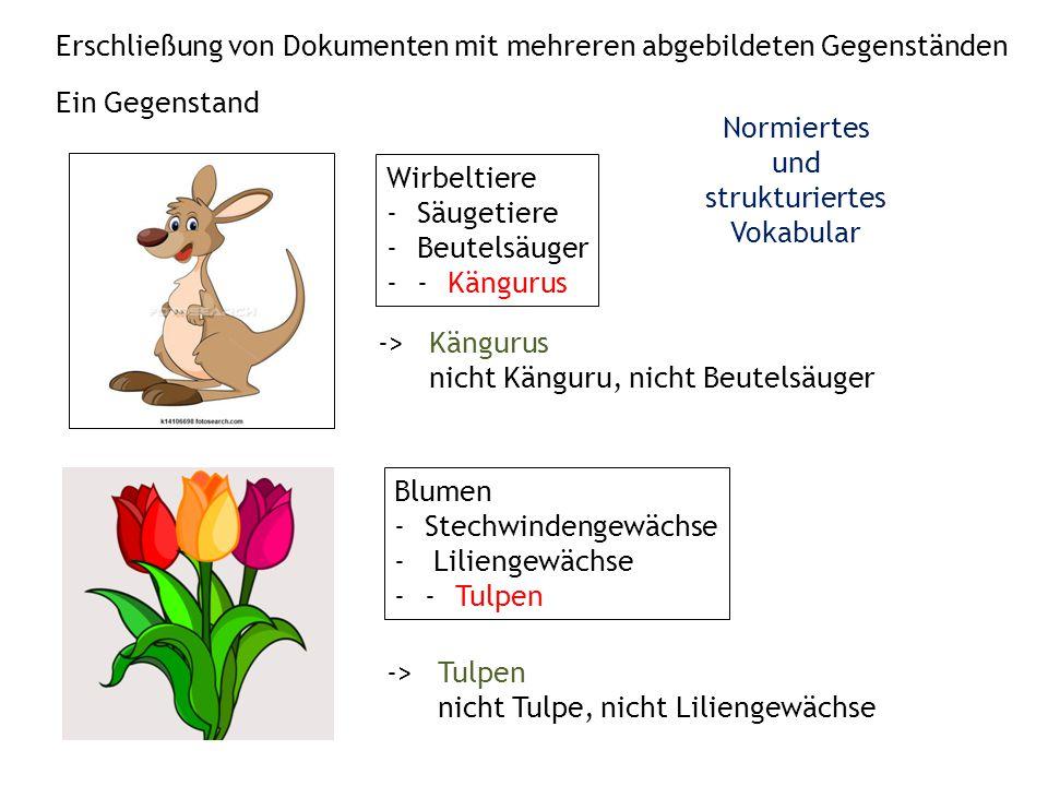 Erschließung von Dokumenten mit mehreren abgebildeten Gegenständen Wirbeltiere -Säugetiere -Beutelsäuger --Kängurus Blumen -Stechwindengewächse - Liliengewächse --Tulpen -> Kängurus nicht Känguru, nicht Beutelsäuger -> Tulpen nicht Tulpe, nicht Liliengewächse Ein Gegenstand Normiertes und strukturiertes Vokabular