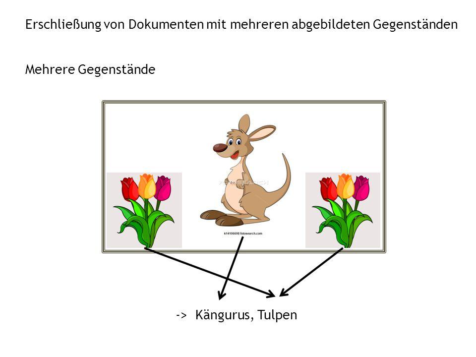 Erschließung von Dokumenten mit mehreren abgebildeten Gegenständen -> Kängurus, Tulpen Mehrere Gegenstände