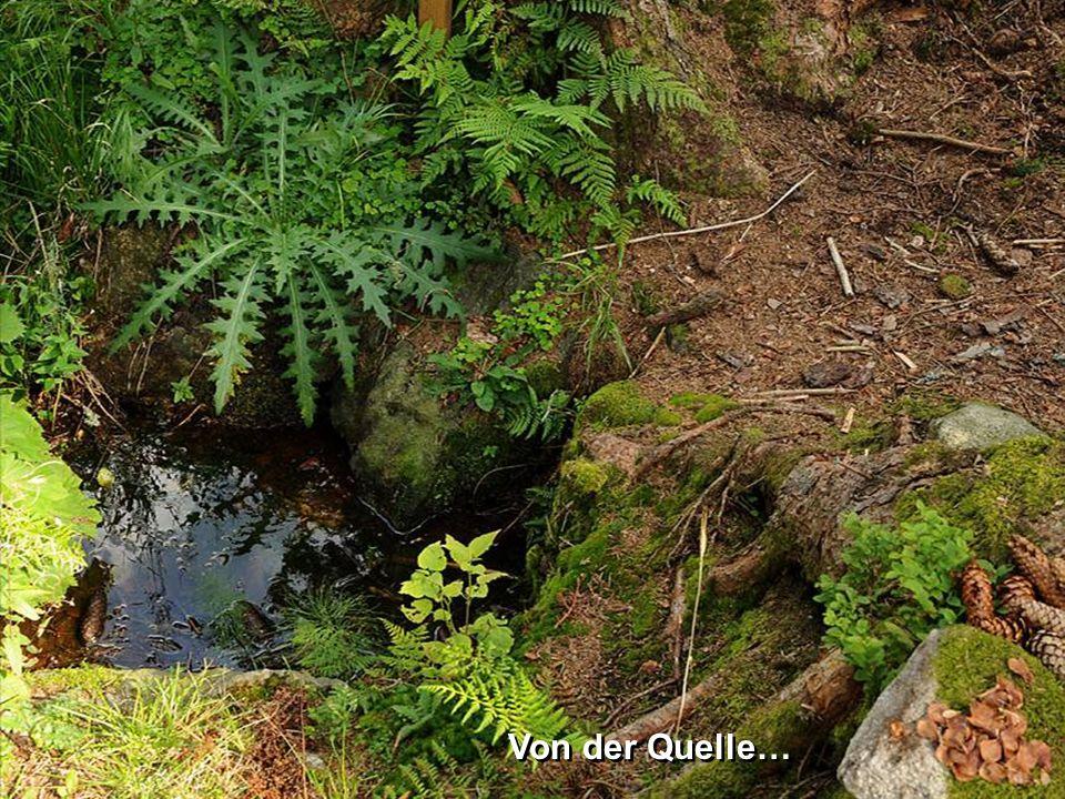 D er K amp ist mit einer Länge von 153 km das größte Fließgewässer des Waldviertels.