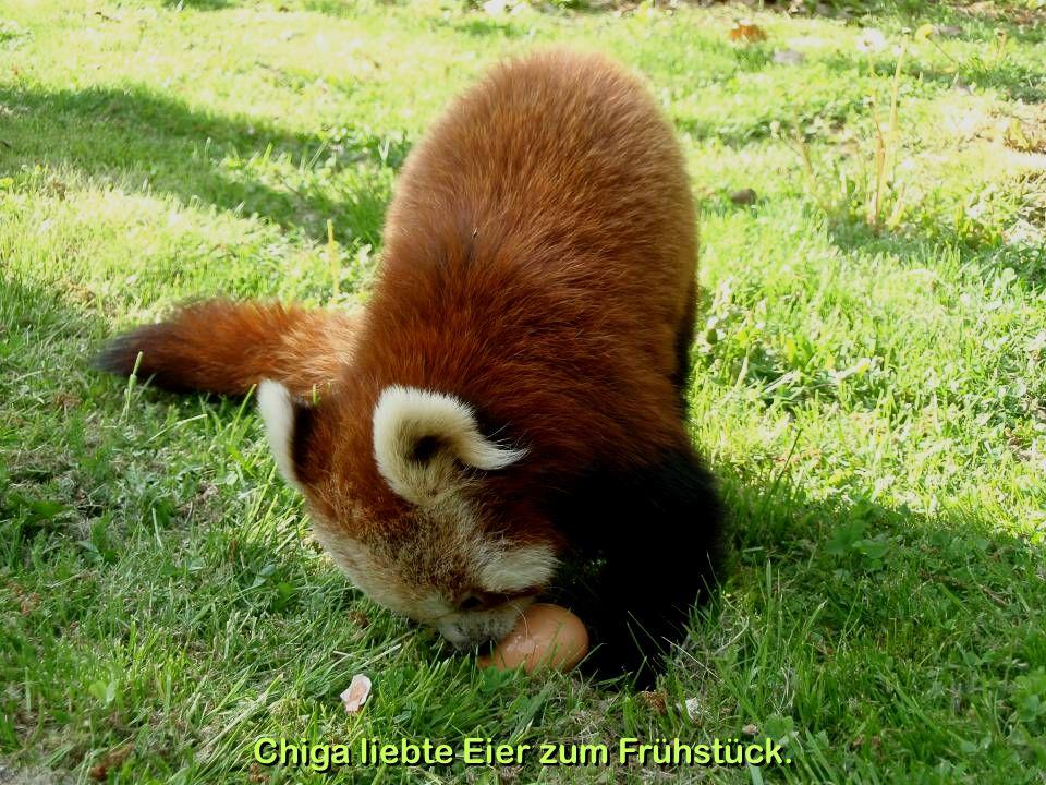 Im Kurpark von Gars am Kamp lebte 2008 noch ein Panda-Pärchen.