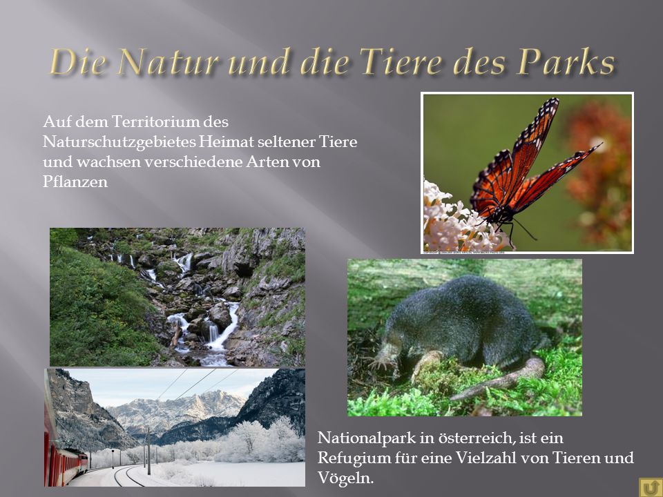 Nationalpark in österreich, ist ein Refugium für eine Vielzahl von Tieren und Vögeln. Auf dem Territorium des Naturschutzgebietes Heimat seltener Tier