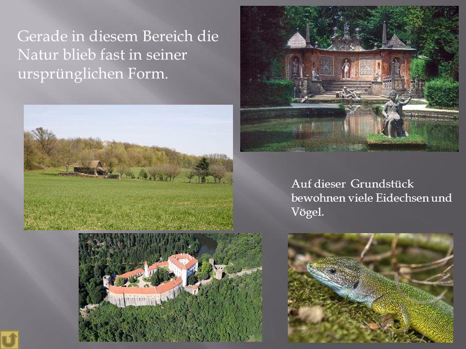 Gerade in diesem Bereich die Natur blieb fast in seiner ursprünglichen Form. Auf dieser Grundstück bewohnen viele Eidechsen und Vögel.