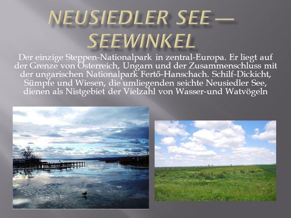 Der einzige Steppen-Nationalpark in zentral-Europa. Er liegt auf der Grenze von Österreich, Ungarn und der Zusammenschluss mit der ungarischen Nationa
