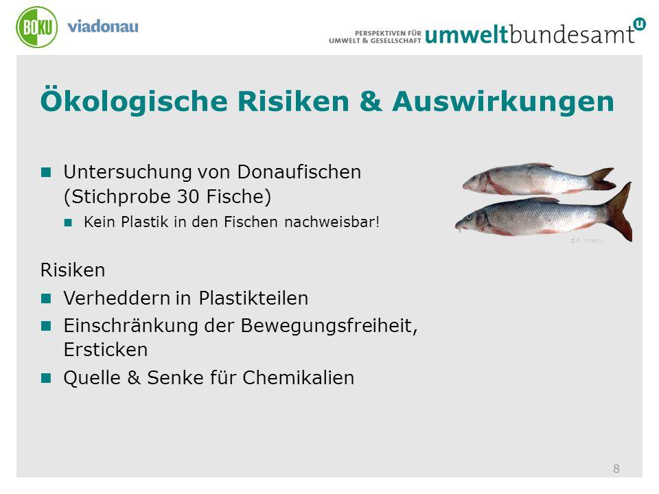 Ökologische Risiken & Auswirkungen 8 Untersuchung von Donaufischen (Stichprobe 30 Fische) Kein Plastik in den Fischen nachweisbar! Risiken Verheddern