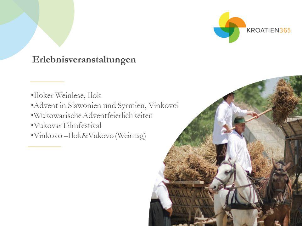 Erlebnisveranstaltungen Iloker Weinlese, Ilok Advent in Slawonien und Syrmien, Vinkovci Wukowarische Adventfeierlichkeiten Vukovar Filmfestival Vinkovo –Ilok&Vukovo (Weintag)