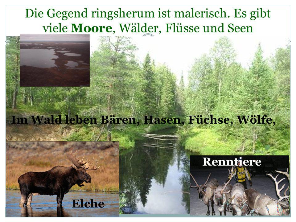 Hier wachsen viele Pilzen und Beeren: Himbeere, Blaubeere, Moosbeere, Preiselbeere, Moosbrombeere