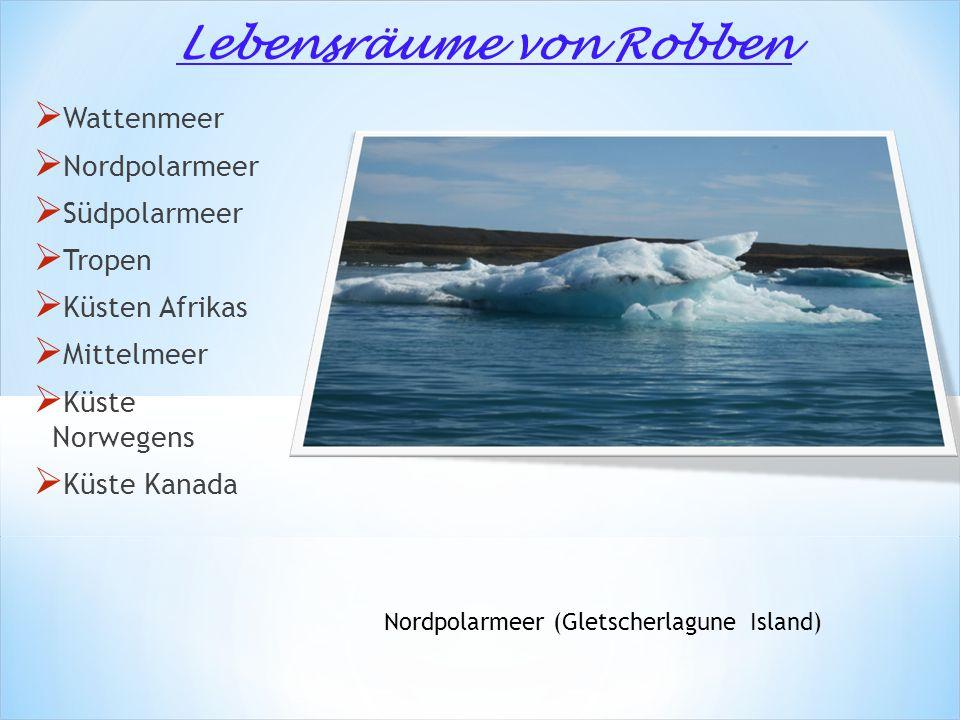  Wattenmeer  Nordpolarmeer  Südpolarmeer  Tropen  Küsten Afrikas  Mittelmeer  Küste Norwegens  Küste Kanada Nordpolarmeer (Gletscherlagune Island) Lebensräume von Robben