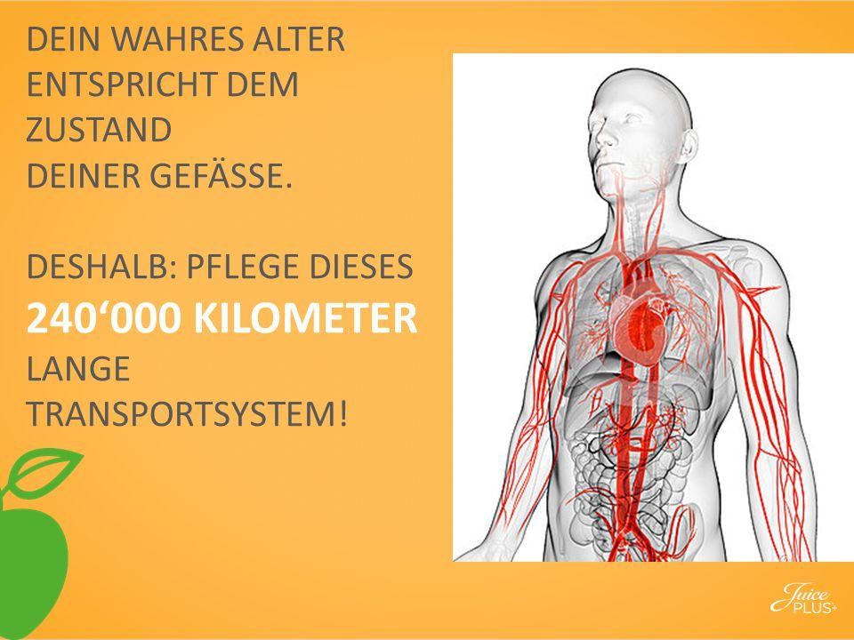 DEIN WAHRES ALTER ENTSPRICHT DEM ZUSTAND DEINER GEFÄSSE. DESHALB: PFLEGE DIESES 240'000 KILOMETER LANGE TRANSPORTSYSTEM!