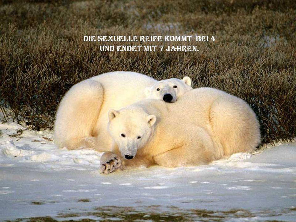 die kleinen bleiben bis zu ihrem 3. lebensjahr bei ihrer mutter. eine sehr kritische periode. die sterblichkeitsrate ist hoch.