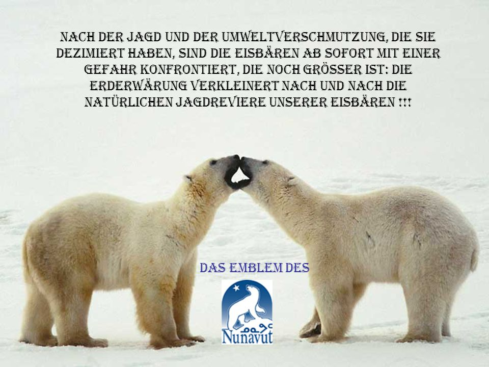 arktisches motel mit allem komfort für die eisbären !!!