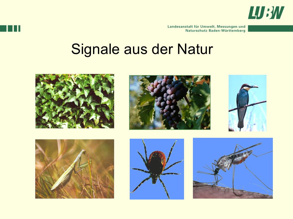 Signale aus der Natur