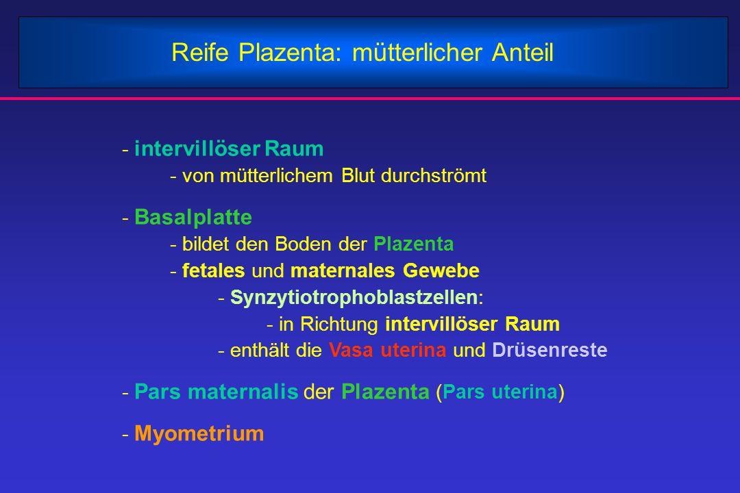 Reife Plazenta: mütterlicher Anteil - intervillöser Raum - von mütterlichem Blut durchströmt - Basalplatte - bildet den Boden der Plazenta - fetales u