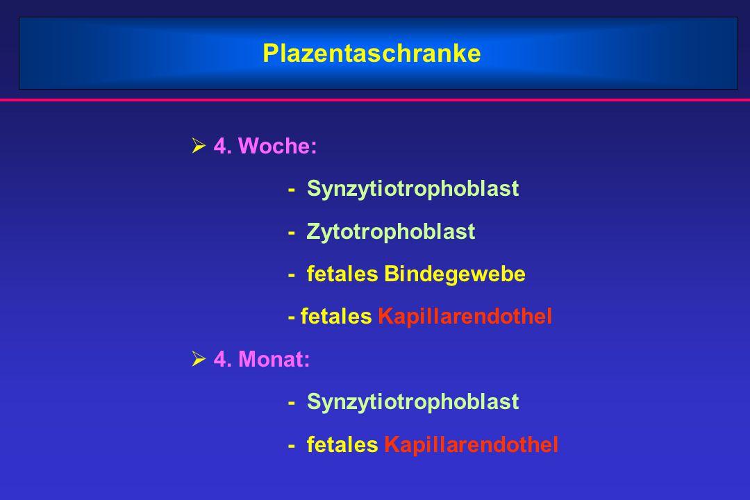Plazentaschranke  4. Woche: - Synzytiotrophoblast - Zytotrophoblast - fetales Bindegewebe - fetales Kapillarendothel  4. Monat: - Synzytiotrophoblas