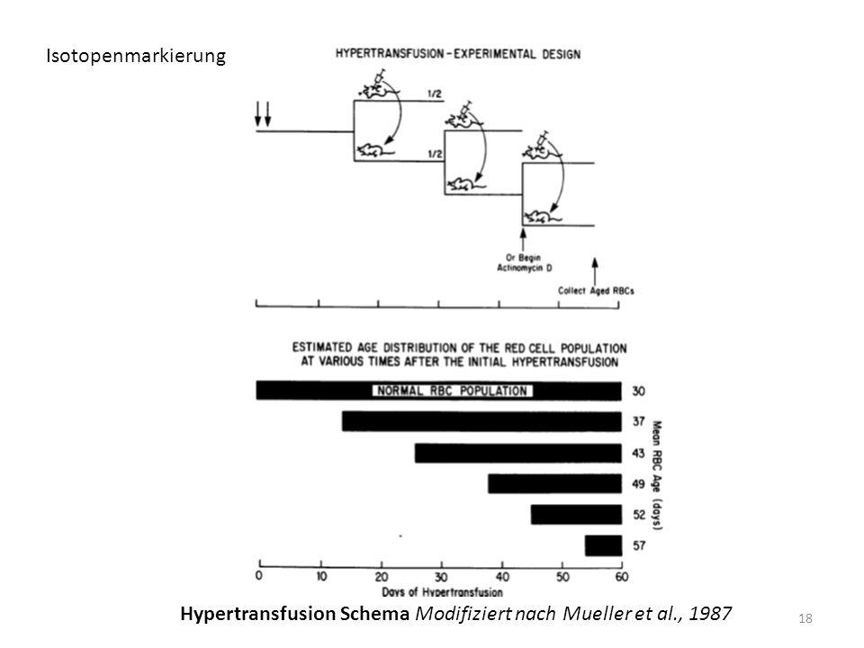 Isotopenmarkierung 18 Hypertransfusion Schema Modifiziert nach Mueller et al., 1987