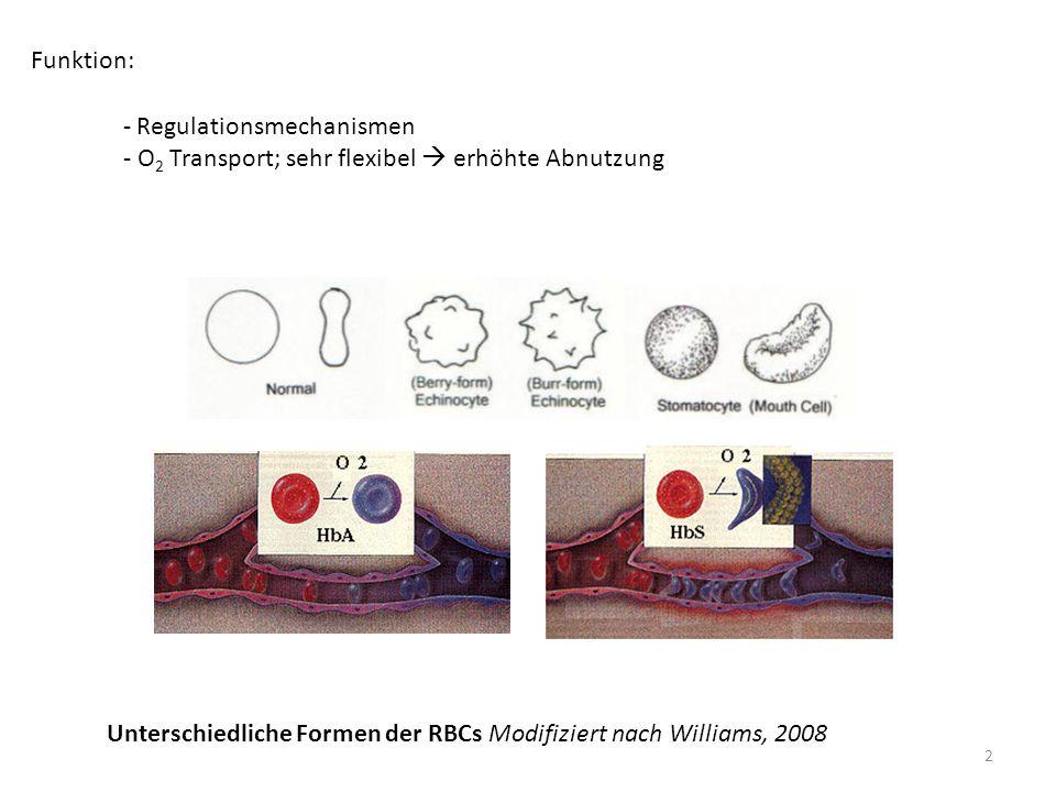 - Regulationsmechanismen - O 2 Transport; sehr flexibel  erhöhte Abnutzung Funktion: Unterschiedliche Formen der RBCs Modifiziert nach Williams, 2008 2