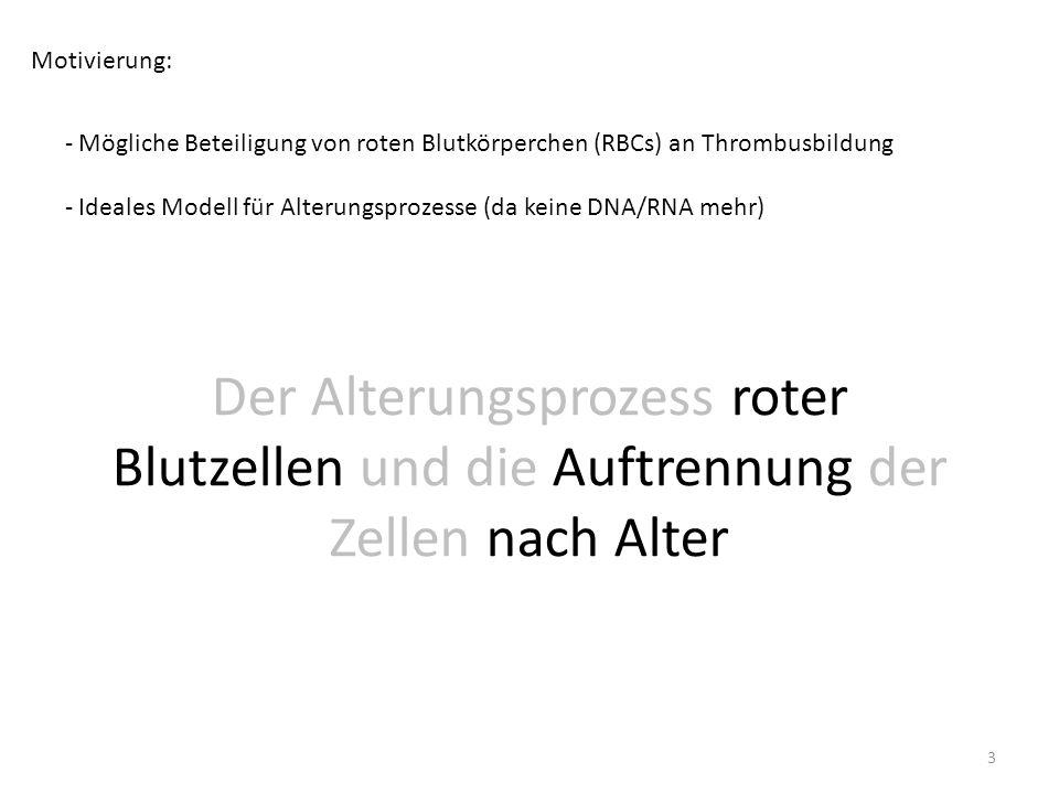 Motivierung: - Mögliche Beteiligung von roten Blutkörperchen (RBCs) an Thrombusbildung - Ideales Modell für Alterungsprozesse (da keine DNA/RNA mehr)