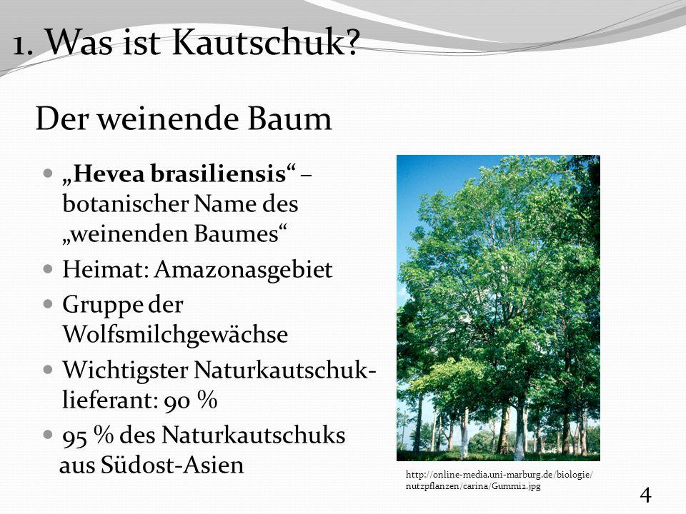 """Der weinende Baum """"Hevea brasiliensis wächst im Gebiet des """"Kautschukgürtels 5 http://www.oldtimerreifen-moeller.de/pictures/kguertl.jpg 1."""