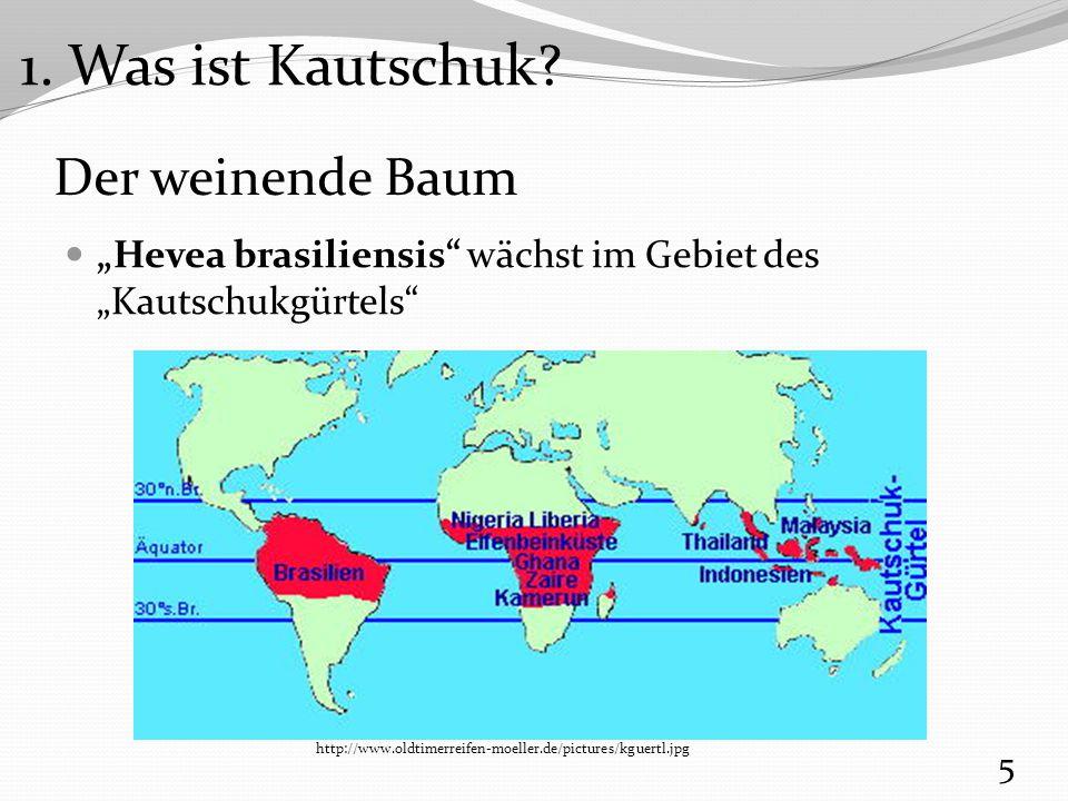 """Der weinende Baum Milchsaft des Kautschukbaums: Latex Spanisch """"leche für Milch  Latex 6 http://www.virusdoktor.de/patong2005/kautschuk.jpg 1."""