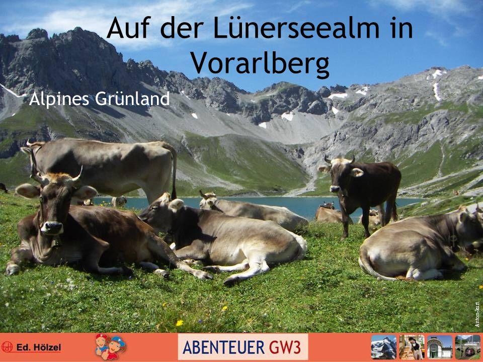 Auf der Lünerseealm in Vorarlberg Alpines Grünland Anton-kurt