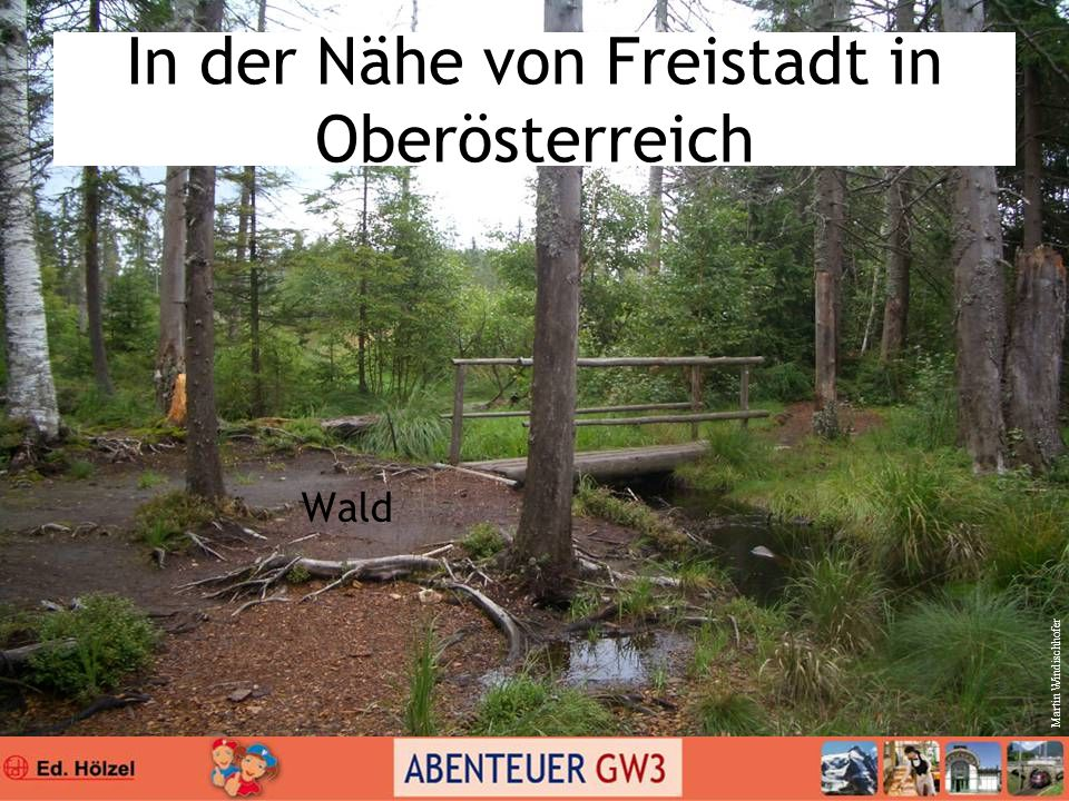In der Nähe von Freistadt in Oberösterreich Wald Martin Windischhofer