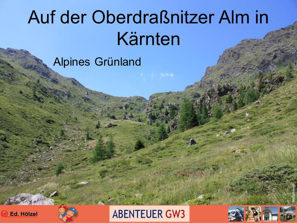 Auf der Oberdraßnitzer Alm in Kärnten Alpines Grünland Mefusbren69