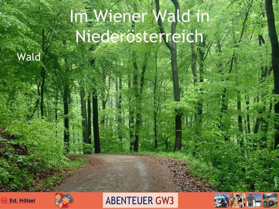 Im Wiener Wald in Niederösterreich Wald Traudi31