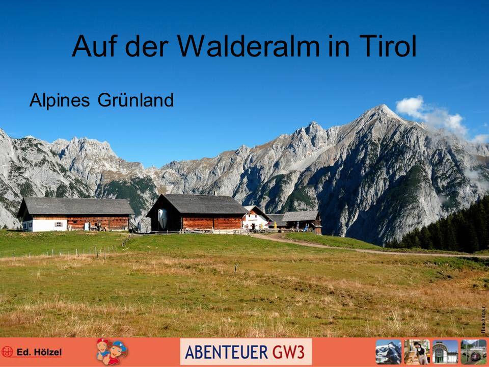 Auf der Walderalm in Tirol Alpines Grünland Haneburger