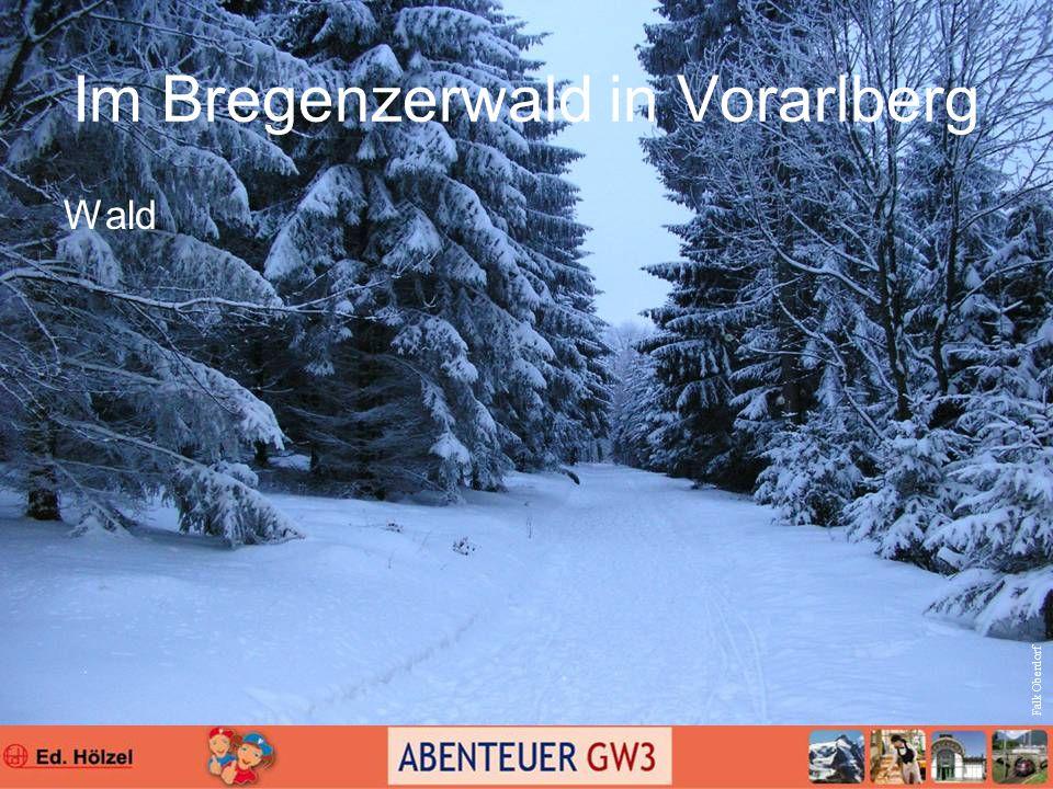 Im Bregenzerwald in Vorarlberg Wald Falk Oberdorf