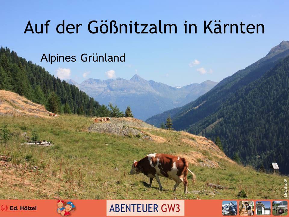 Auf der Gößnitzalm in Kärnten Alpines Grünland Mefusbren69