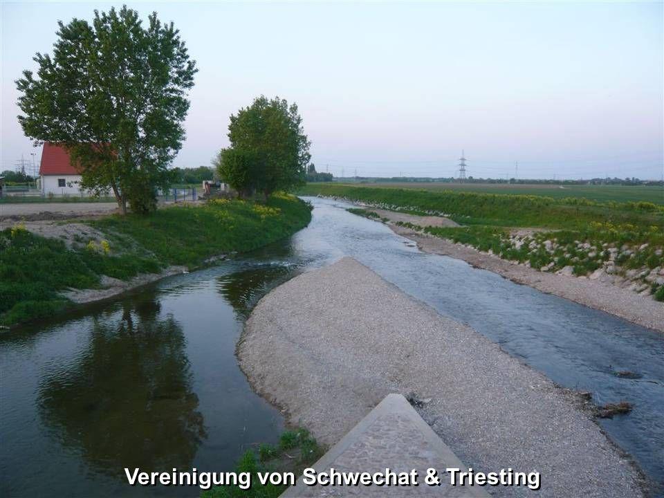 Eine Kuriosität stellt die Bewässerung des Schlossparks Laxenburg dar. Er erhält das Wasser nicht von der naheliegenden Schwechat, sondern aus München